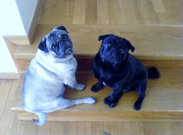 Maurice & Hugo