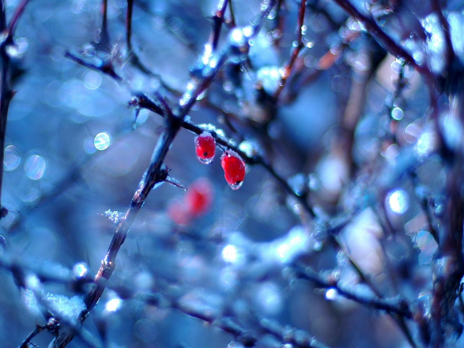 Wallpaper New: Beautiful Nature Winter Wallpaper