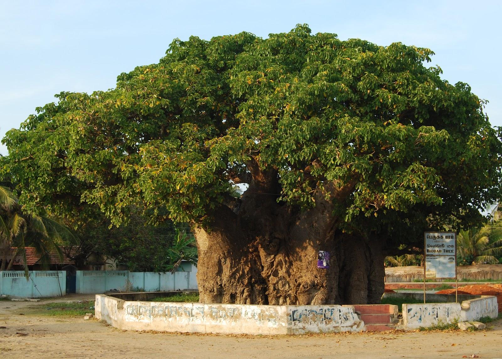 Mannar Sri Lanka  Wikipedia