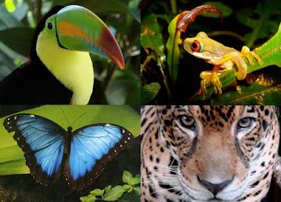 Bioma Hutan Hujan dan Karakteristiknya