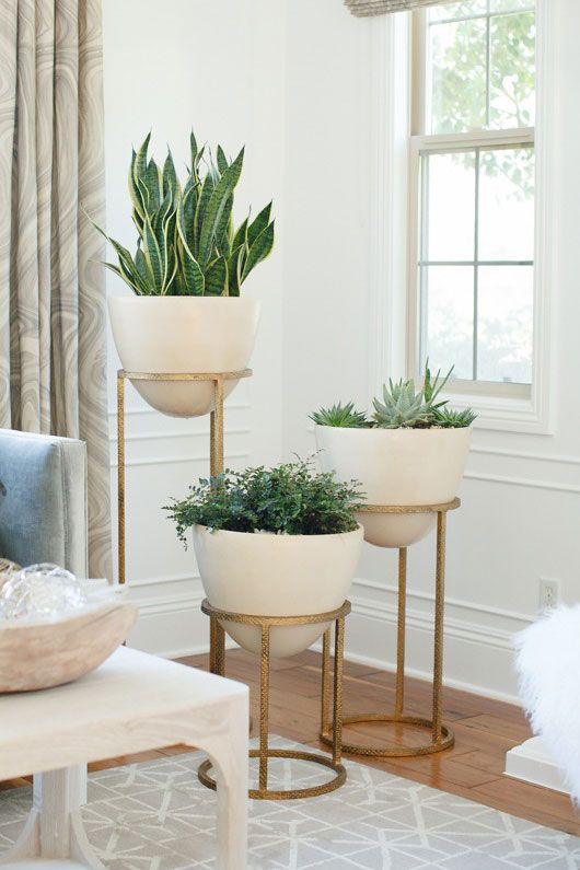 designs blog styling essentials plants for decorating your home