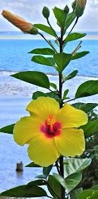 Plant Life Flower Types