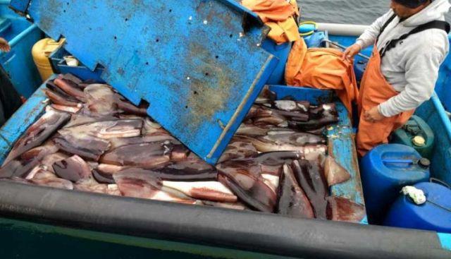 Pescadores artesanales celebran designación de ministro Fontaine