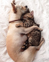 amor gato cão