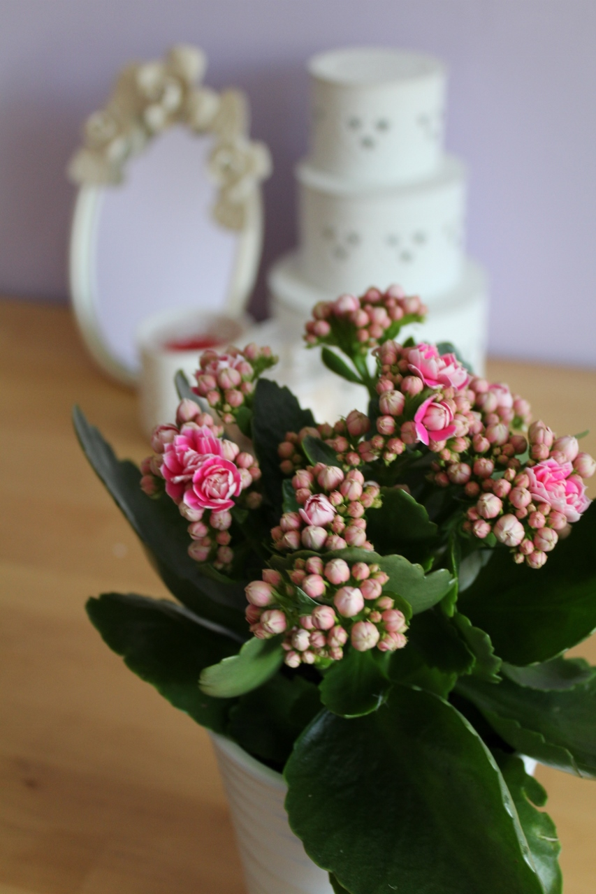 Two years of blogging - plant pot and pink flowers on desk