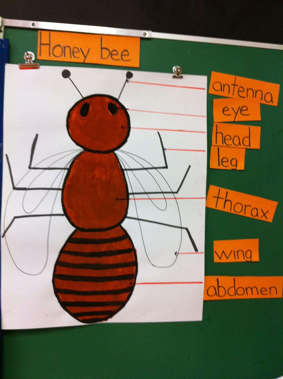 on Honey Bee Body Parts Diagram