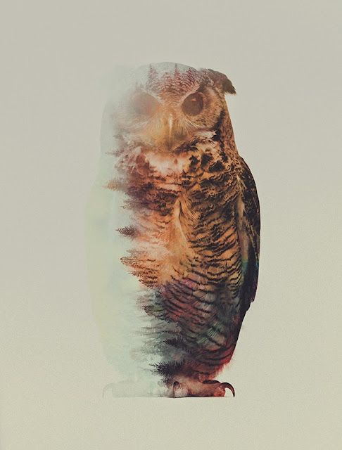 Andreas Lie Owl Double Exposure
