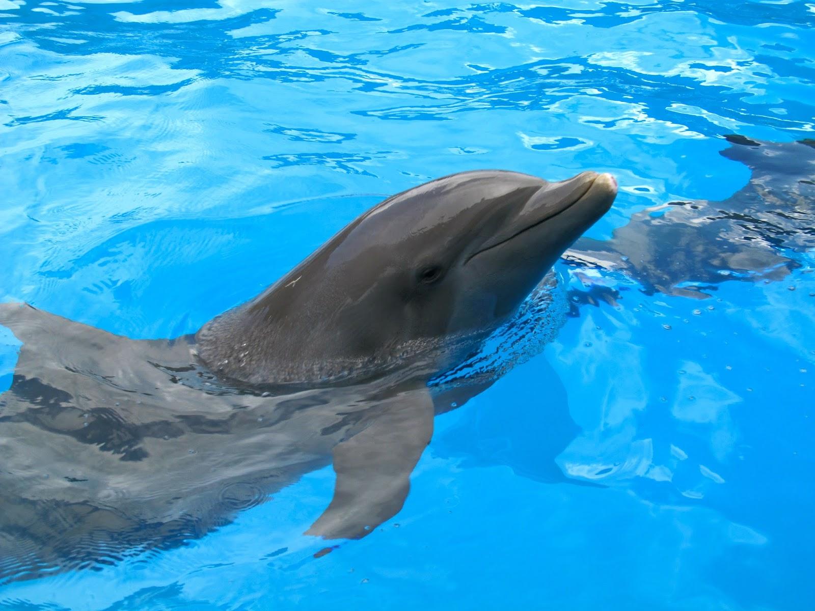 Dolphin at Miami Seaquarium, FL - ouroutdoortravels.blogspot.com