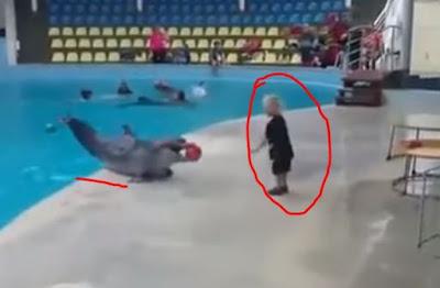 فيديو: أروع فيديو لبراءة طفل مع دلفين