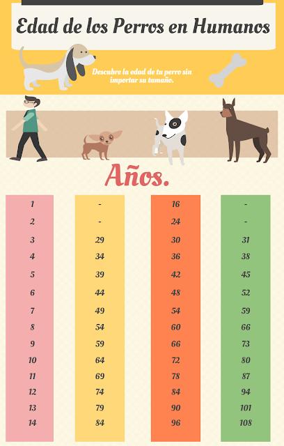 tabla calcular edad de los bichones malteses