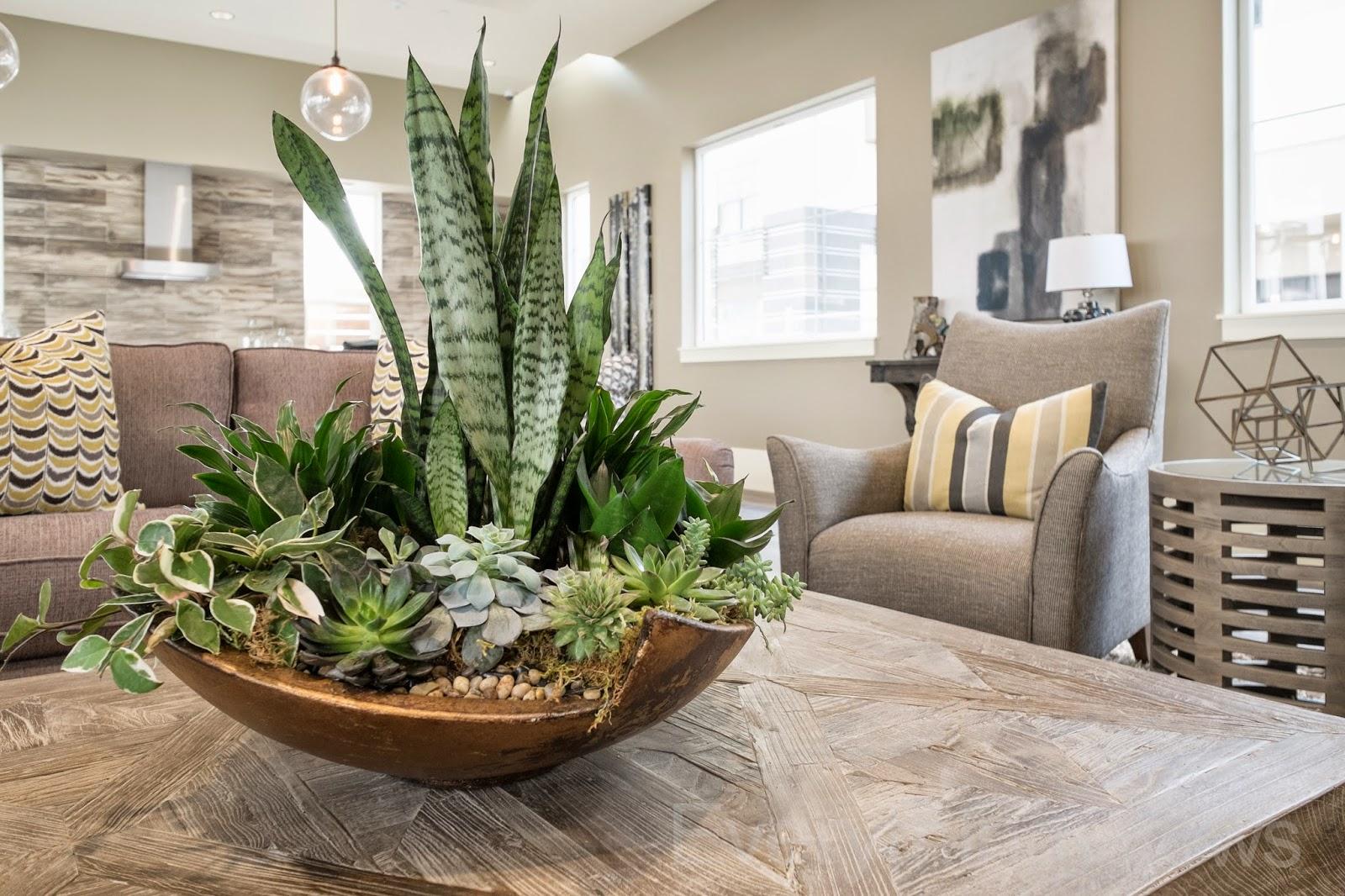 Everything Grows Spotlight Plant Sansevieria