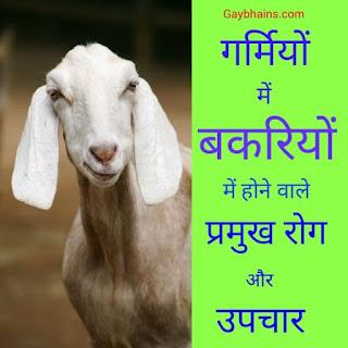 गर्मियों में बकरियों में होने वाले प्रमुख रोग और उपचार