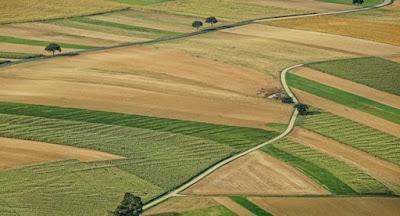 Верховна Рада подовжила мораторій на продаж землі сільгосппризначення до 1 січня 2020 р.