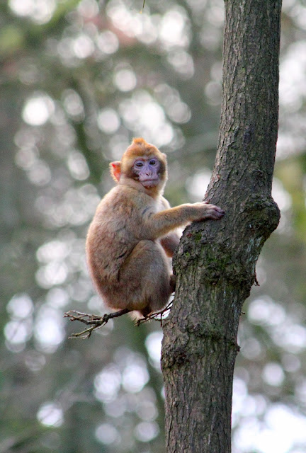 Monkey on tree image
