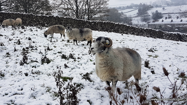 Yorkshire Dales snow in November