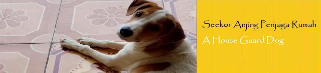 https://ketutrudi.blogspot.com/2019/01/seekor-anjing-penjaga-rumah-house-guard.html