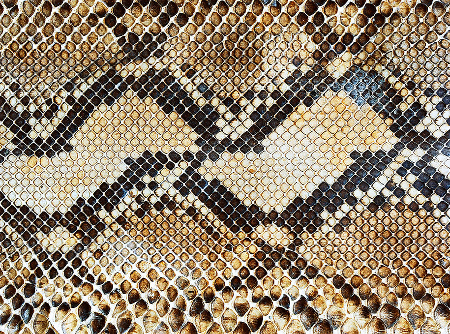 nature patterns pattern natural snake tessellation texture forms skin patrones examples naturaleza mathematics array canning paul scales structures breathtaking textures