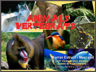 http://clic.xtec.cat/db/jclicApplet.jsp?project=http://clic.xtec.cat/projects/avertebr/jclic/avertebr.jclic.zip&lang=ca&title=Animals+vertebrats