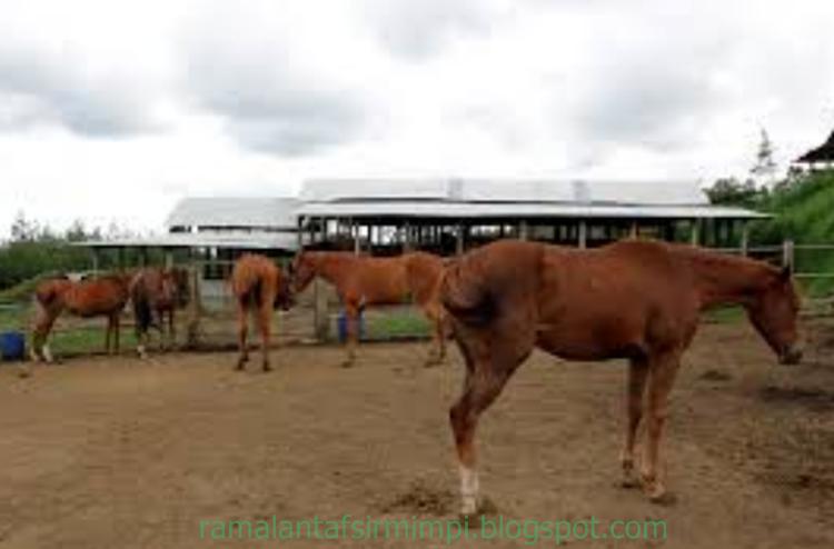 Menurut orangorang yang sudah menelitinya bahwa hewan ini adalah salah satu dari sepuluh  14 Arti Mimpi Melihat Seekor Kuda Menurut Primbon Jawa