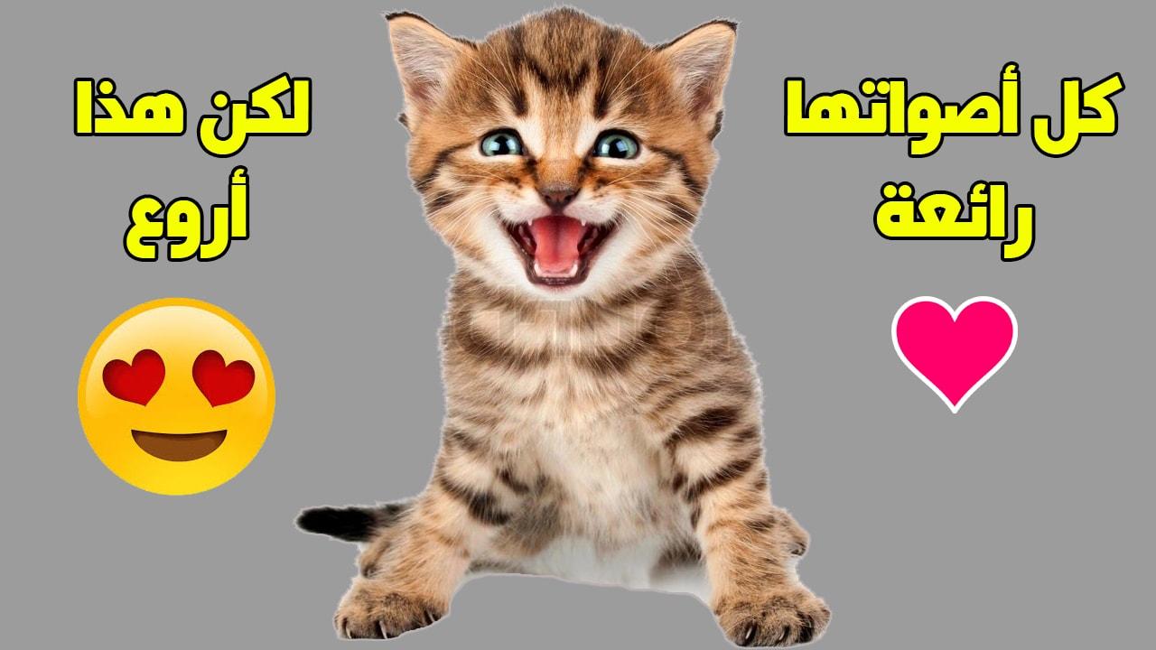 خرخرة القطط من الأصوات المميزة للقطط وهي تفلعلها لترسل لنا مجموعة من الرسائل