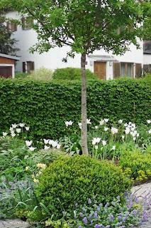 Pflanzplanung Landhausgarten - Zwetschge, Bux, Hainbuche und Stauden