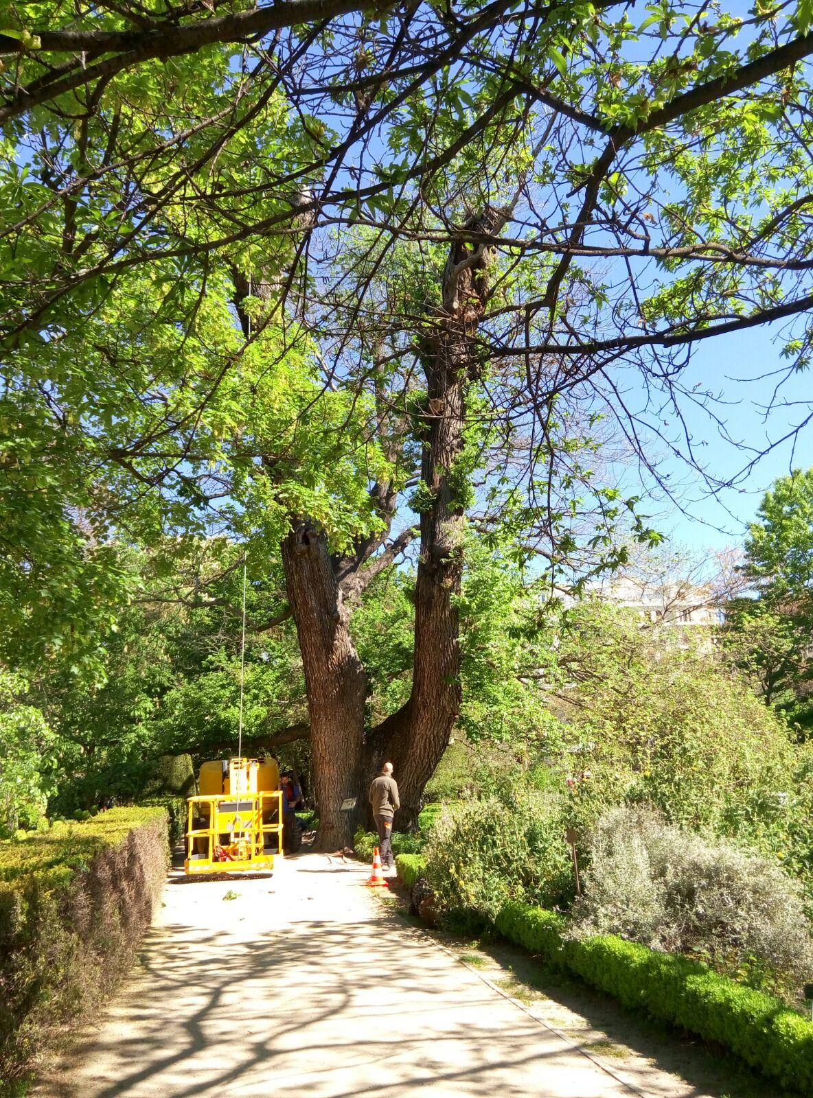 Ceip laura garc a noblejas visitamos el jard n bot nico for Ceip jardin botanico