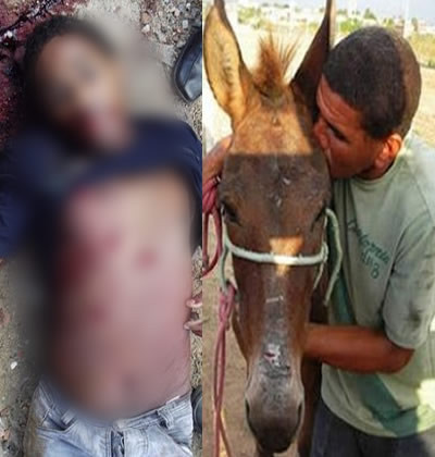 Resultado de imagem para homem apaixonado por Jumenta mata o irmão depois de descobrir que ele tinha relações com o animal