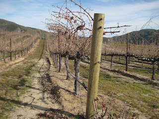 Robert Renzoni Vineyard