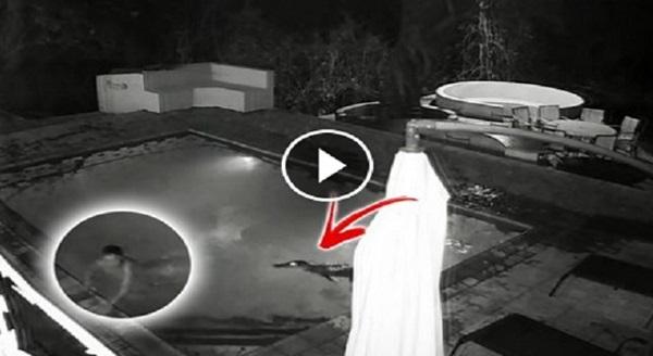[VIDEO] Sepasang Kekasih Sedang Asyik Berasmara di Pool, Tiba-Tiba Datang Seekor… Menakutkan !!!