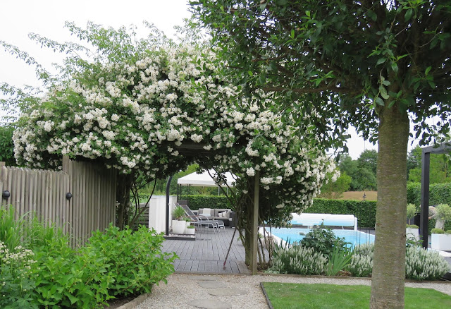 Nyt den hvite hagen - En fantastisk rosepergola i my white garden, trädgårdsrundan, Helsingborg