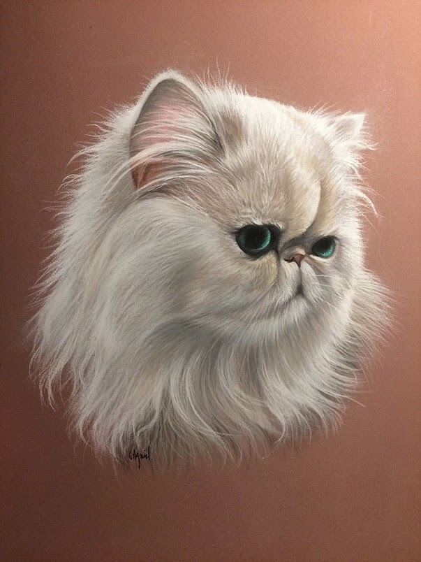 09-Persian-Virginie-Agniel-Pastel-Drawings-of-Cats-and-Dogs-www-designstack-co