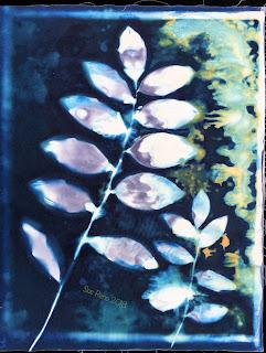 Wet cyanotype_Sue Reno_Image 369