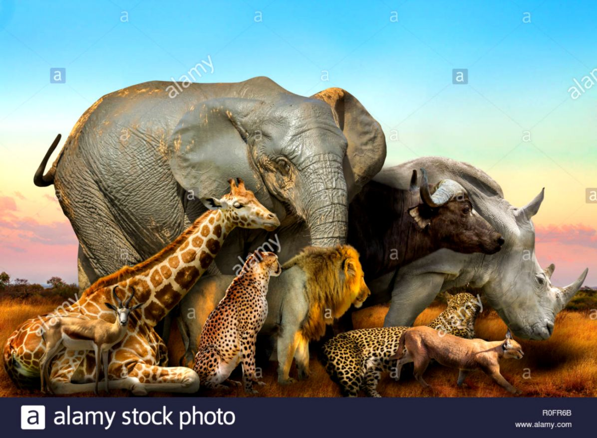 Side view of Big Five and wild african animals composition on
