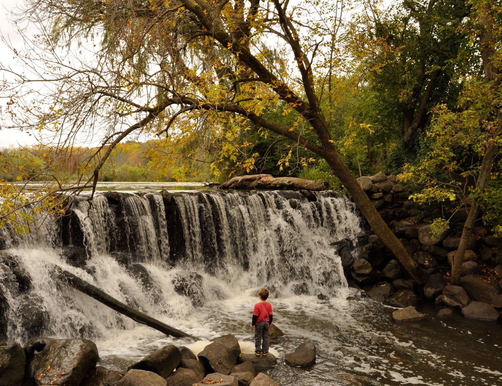 Free Fall Forest Wallpaper Milwaukee Area Parks Wehr Nature Center The Perfect Fall