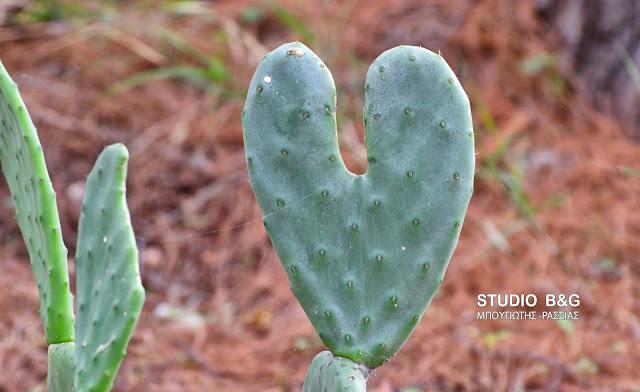 Η φωτογραφία της ημέρας: Μια καρδιά που ...τσιμπάει!!!