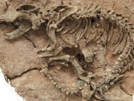 Австралийские палеонтологи обнаружили останки ранее неизвестного вида динозавров, сообщает BBC...