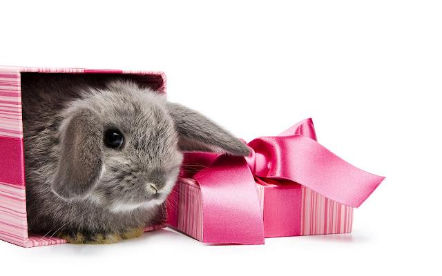 Konijn in een roze doos