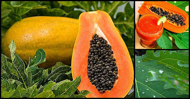 Papaya Extract Slows Down Tumor Growth And Induces Apoptosis (Cell Death)
