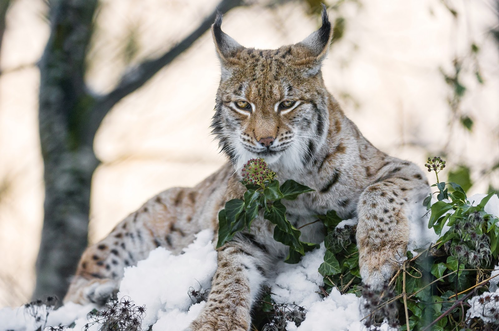 HD Images Of The Wild Animals Wallpapers And Backgrounds