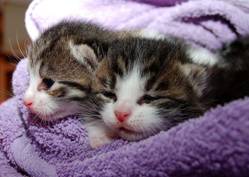 Gatos pequeninos