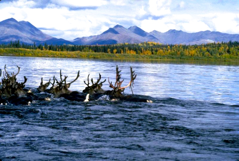 Chuck S Adventures Alaska S Kobuk Valley National Park