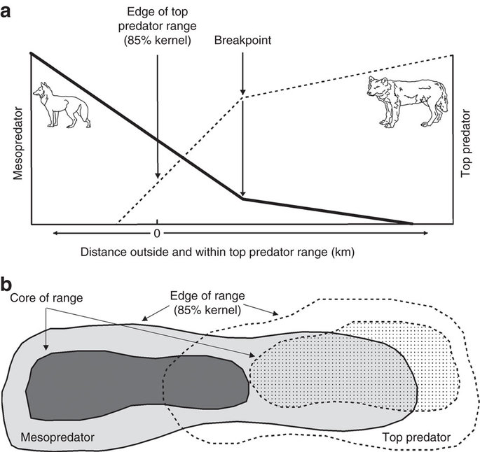 an analysis of the effects of wolf predation on the populations of large ungulates Summary report: utah residents' attitudes towards gray  the gray wolf ( canis lupus) is the largest species in the canid family and  ungulate prey is the primary factor influencing population dynamics (keith 1983  messier and  impacts that wolves have had on predators and scavenger populations in ynp following.