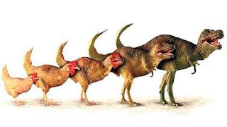 İlk Evrim Düşünceleri ve Evrim Teorisi