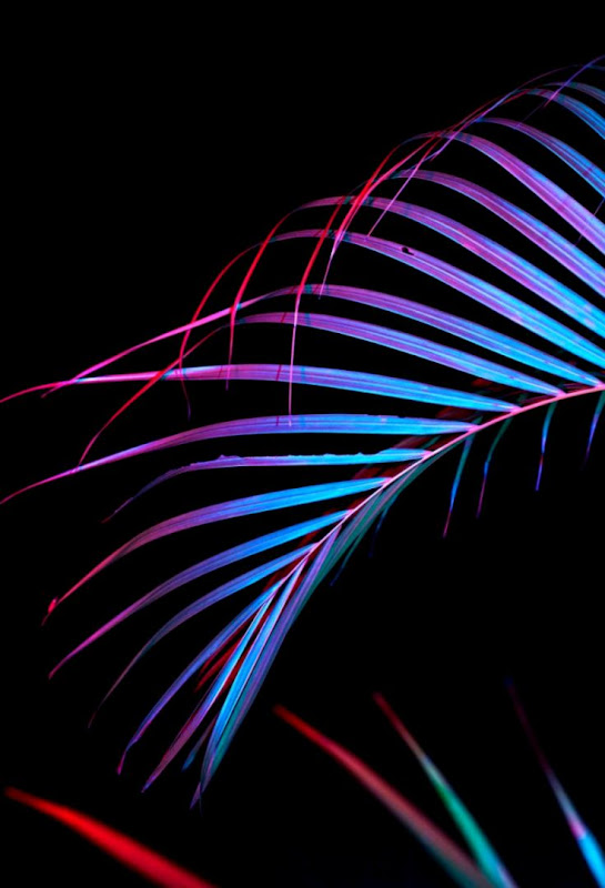 Little Android Neon Lights Wallpaper Wallpapers Sheet