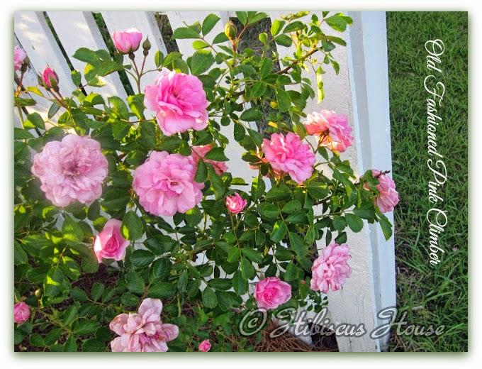 Authentic Haven Brand Moo Poo Tea Hibiscus House Roses
