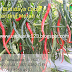 Manfaat Plastik Uv - Cara Budidaya Cabe Keriting Merah