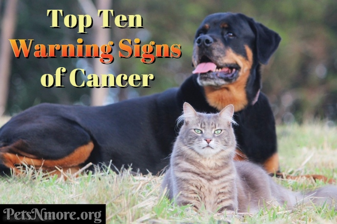 Pets N More The Top 10 Warning Signs Of Cancer