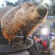 Does filing your tax return remind you of the movie Groundhog Day?