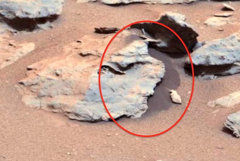 UFO SIGHTINGS DAILY: 100% Proof Of Small Animal On Mars ...