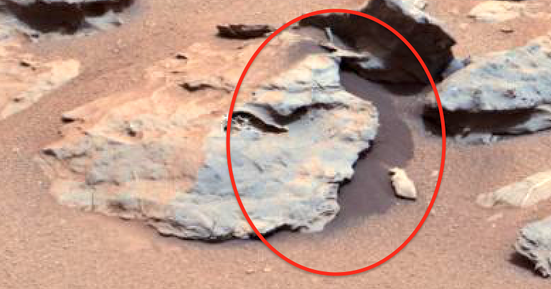 mars rover finds animal - photo #22